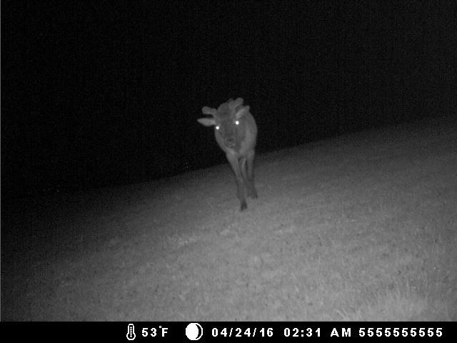 BTR yard elk